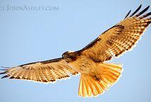 inspiring wing and bird pics