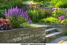garden / by Gayle Bourland