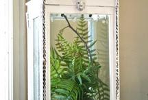 Gardening/plant Ideas