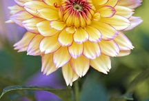 Fleurs anglaises