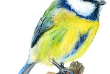 Bird Drawings, Paintings and Artwork / My watercolour pencil drawings and paintings relating to birds, both wild and pets.