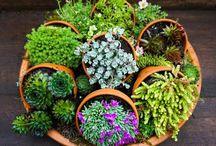 Outside Flower Ideas