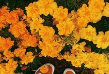 *feet*