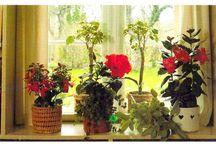 Plants...west window