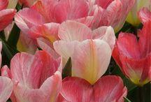 Flowers wedding / Colori