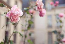 blooms / by Kamshim Lau