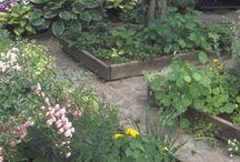 Garden Inspiration / by Amy Evenson Ten Broeck