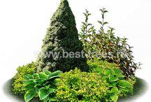 Идеи озеленения