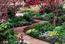 Gardens / Beautiful flowers and trees