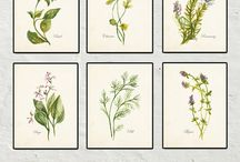 Botanicals & Seeds (folio)