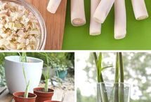 plantas y vegetales