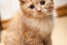 Kediler-cats