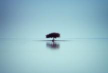Photography/Landscape