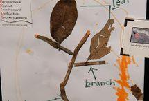 TEACH: Trees Study