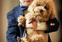 Doggies!! / by Kayla Kummerow