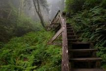 Wild Pacific Trail - Ucluelet / Beautiful picture of the Wild Pacific Trail in Ucluelet Bc