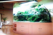 Design Aquarium / Tato nástěnka je zaměřena na celkový design-dojem  projektu. www.designaquarium.cz