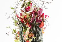 Floristic Ideas