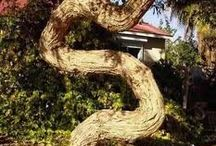 Topiary and other quirky deformations of trees and shrubs