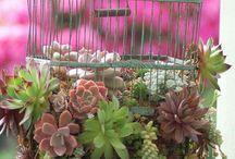 Сад Цветник Балкон