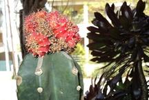 Nature ~ Cactus & Succulents ~