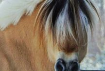 Mane-iac Monday / Horse Manes and Tails from wild and crazy to show ready. / by C-A-L Ranch Stores