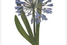 www.BotanicalArtElements.com / Contemporary Prints, Notelets & Postcards