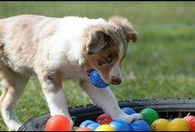 Puppy & Dog Socialization