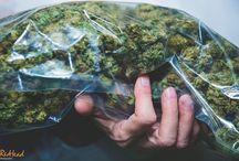 Cannabis / www.kushqueen.shop