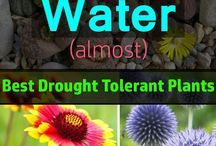 Water wise and drought tolerant plants