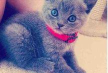Crazy catlady