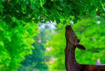 Fotografie /  Fotografie Tiere, Pflanzen, Makrofotografie, Gemischtes, Schwarz-Weiß und Colorkey Fotografie.