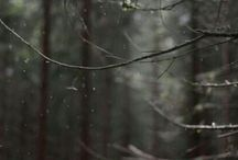 bosques :3