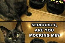 Cats Are Funny
