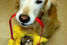 Τα πιο γλυκά σκυλάκια! / Τα πιο γλυκά σκυλάκια του διαδικτύου! Αστεία, χαριτωμένα και γεμάτα μπελάδες σκυλάκια που έτυχε να γίνουν διάσημα στο διαδίκτυο!