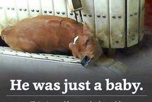 saving animals