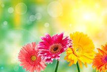Květinové sny