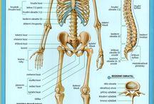 VÝUKA - lidské tělo