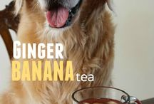 Recipes - DOG Drinks & Broths / by MCAS Pets