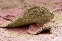 Microscopía / El universo en ti