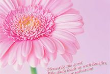 positive sayings pink