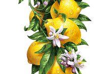 W. | Lemons