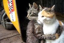 Cats Worth Reading