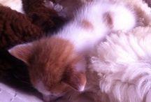 Phili tomas / Vida de un gatito