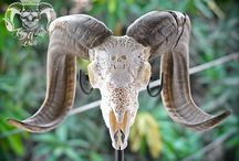 Hand Carved Ram Skull with King Of Skull and Natural Finish