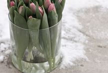 Vackra blommor och växter