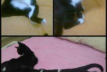 Yuva Arayan Kediler