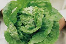Salads, Greens