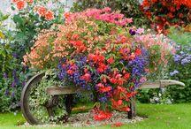 Garden / Flower planting, garden ideas, vegetable help