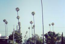 California  / 2013